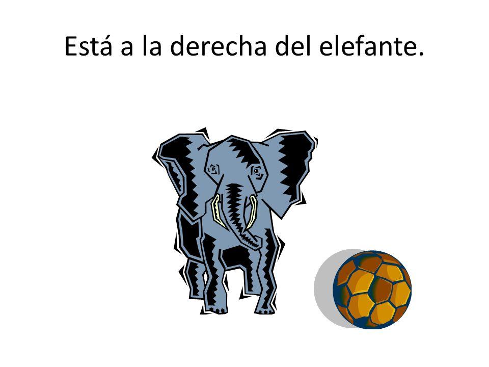 Está a la derecha del elefante.