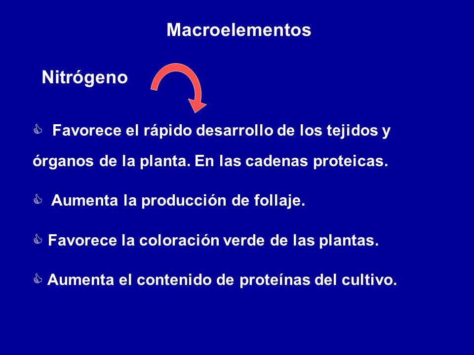 Nitrógeno Macroelementos C Favorece el rápido desarrollo de los tejidos y órganos de la planta. En las cadenas proteicas. C Aumenta la producción de f