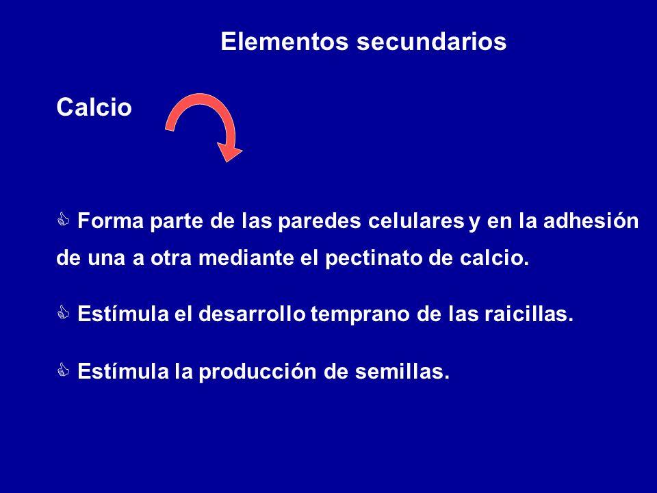 Elementos secundarios Calcio C Forma parte de las paredes celulares y en la adhesión de una a otra mediante el pectinato de calcio. C Estímula el desa