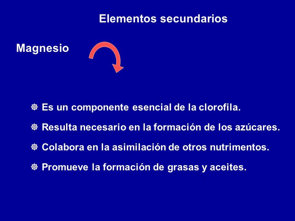 Elementos secundarios Magnesio ] Es un componente esencial de la clorofila. ] Resulta necesario en la formación de los azúcares. ] Colabora en la asim