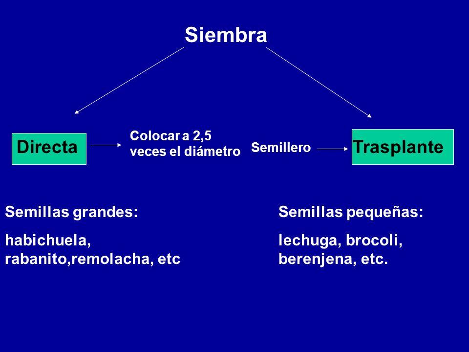 Siembra DirectaTrasplante Semillas grandes: habichuela, rabanito,remolacha, etc Colocar a 2,5 veces el diámetro Semillas pequeñas: lechuga, brocoli, b