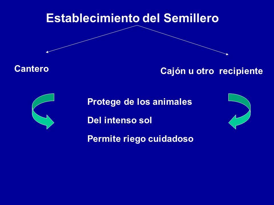 Establecimiento del Semillero Cantero Cajón u otro recipiente Protege de los animales Del intenso sol Permite riego cuidadoso