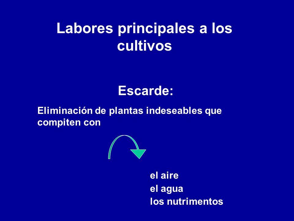 Labores principales a los cultivos Escarde: Eliminación de plantas indeseables que compiten con el aire el agua los nutrimentos