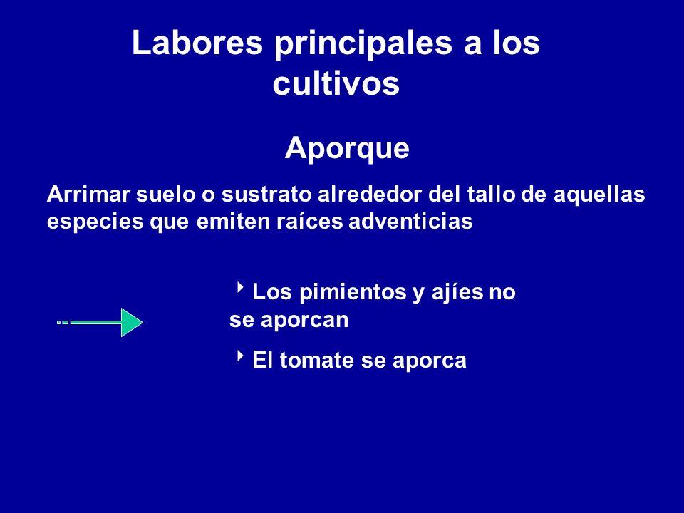 Labores principales a los cultivos Aporque Arrimar suelo o sustrato alrededor del tallo de aquellas especies que emiten raíces adventicias Los pimient