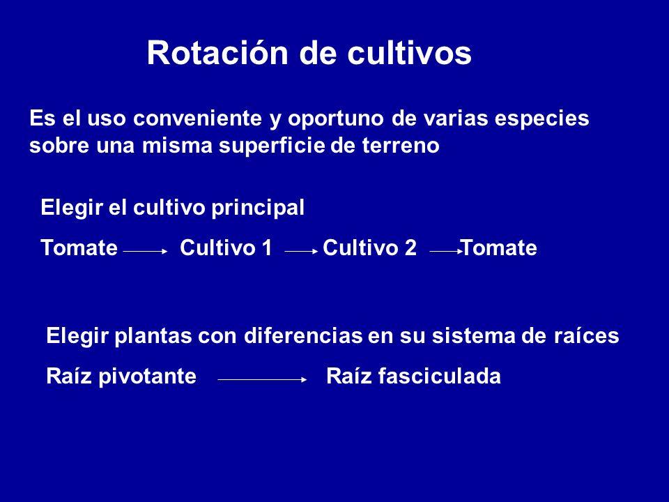 Rotación de cultivos Es el uso conveniente y oportuno de varias especies sobre una misma superficie de terreno Elegir el cultivo principal Tomate Cult