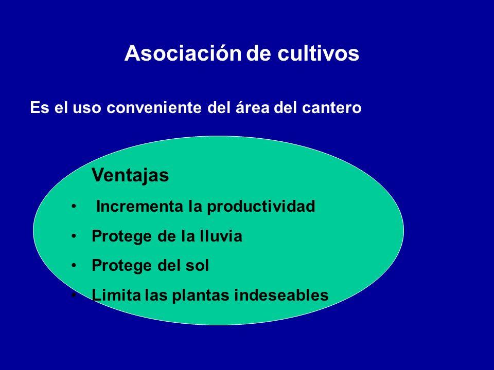 Asociación de cultivos Es el uso conveniente del área del cantero Ventajas Incrementa la productividad Protege de la lluvia Protege del sol Limita las