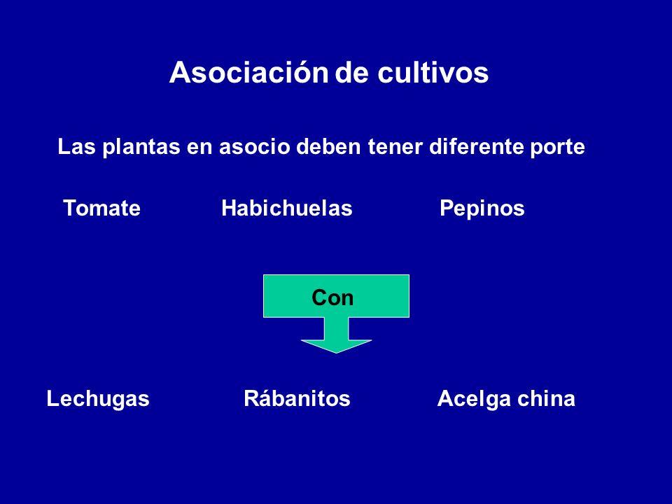 Asociación de cultivos Las plantas en asocio deben tener diferente porte Tomate Habichuelas Pepinos Con Lechugas Rábanitos Acelga china