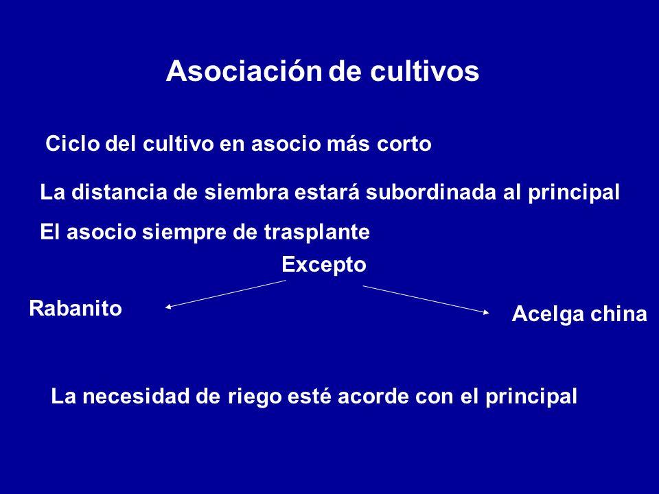 Asociación de cultivos Ciclo del cultivo en asocio más corto La distancia de siembra estará subordinada al principal El asocio siempre de trasplante E