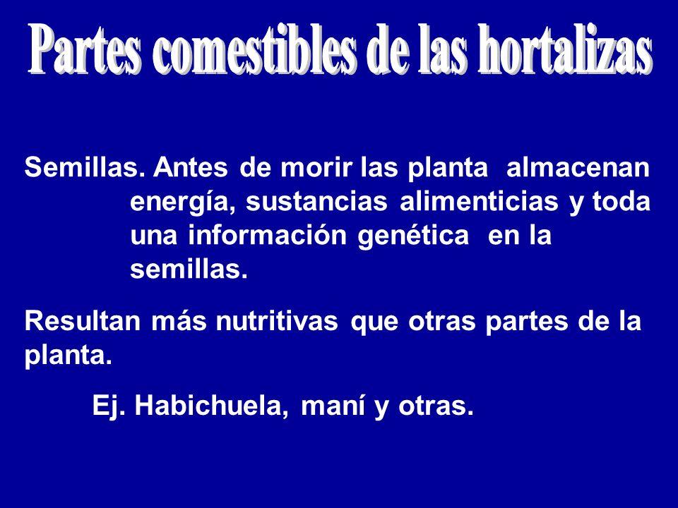 Semillas. Antes de morir las planta almacenan energía, sustancias alimenticias y toda una información genética en la semillas. Resultan más nutritivas