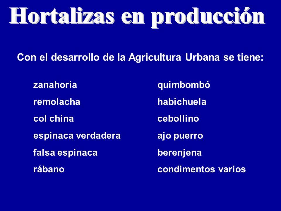 Con el desarrollo de la Agricultura Urbana se tiene: zanahoria remolacha col china espinaca verdadera falsa espinaca rábano quimbombó habichuela cebol
