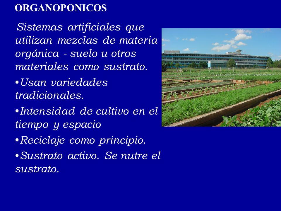 ORGANOPONICOS Sistemas artificiales que utilizan mezclas de materia orgánica - suelo u otros materiales como sustrato. Usan variedades tradicionales.