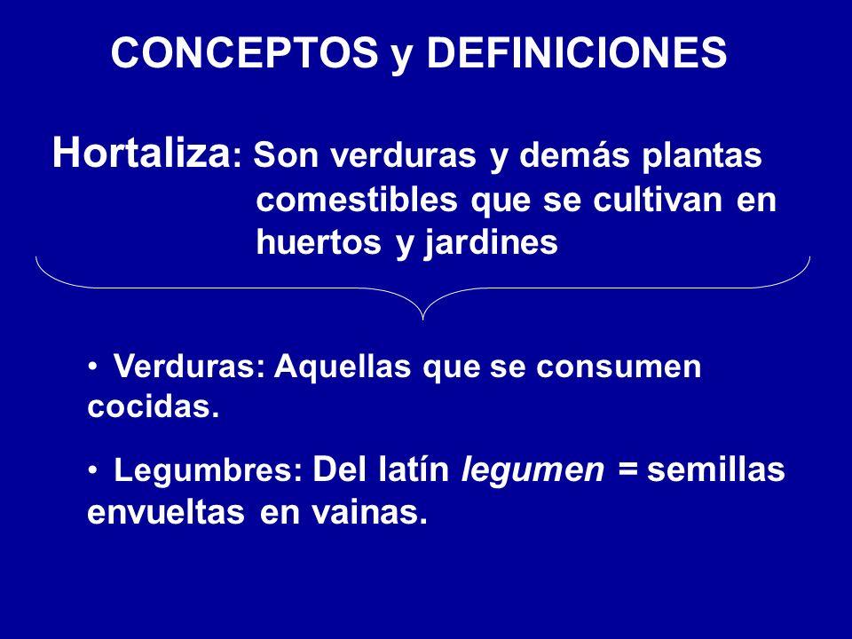 CONCEPTOS y DEFINICIONES Hortaliza : Son verduras y demás plantas comestibles que se cultivan en huertos y jardines Verduras: Aquellas que se consumen