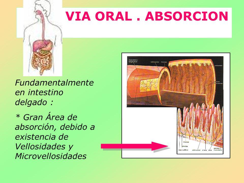 VIA ORAL. ABSORCION Fundamentalmente en intestino delgado : * Gran Área de absorción, debido a existencia de Vellosidades y Microvellosidades