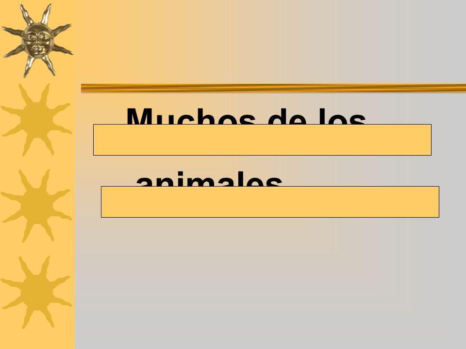 Muchos de los animales