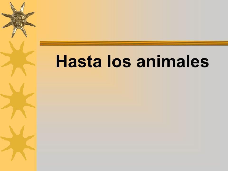 Hasta los animales
