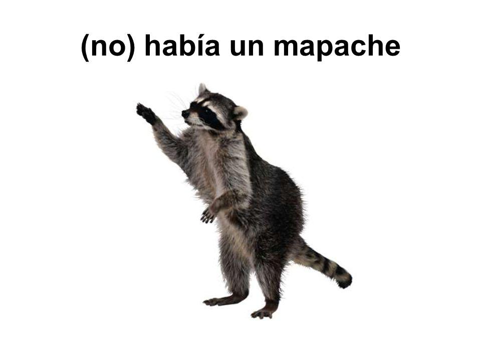 (no) había un mapache