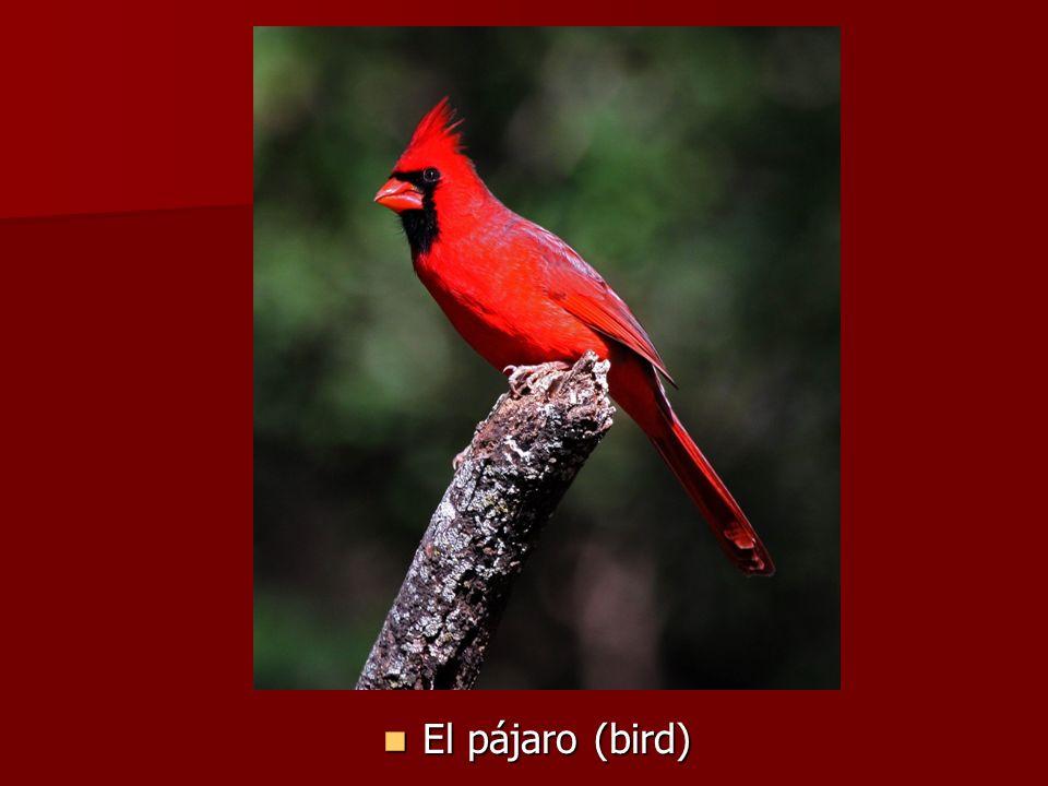 El pájaro (bird) El pájaro (bird)