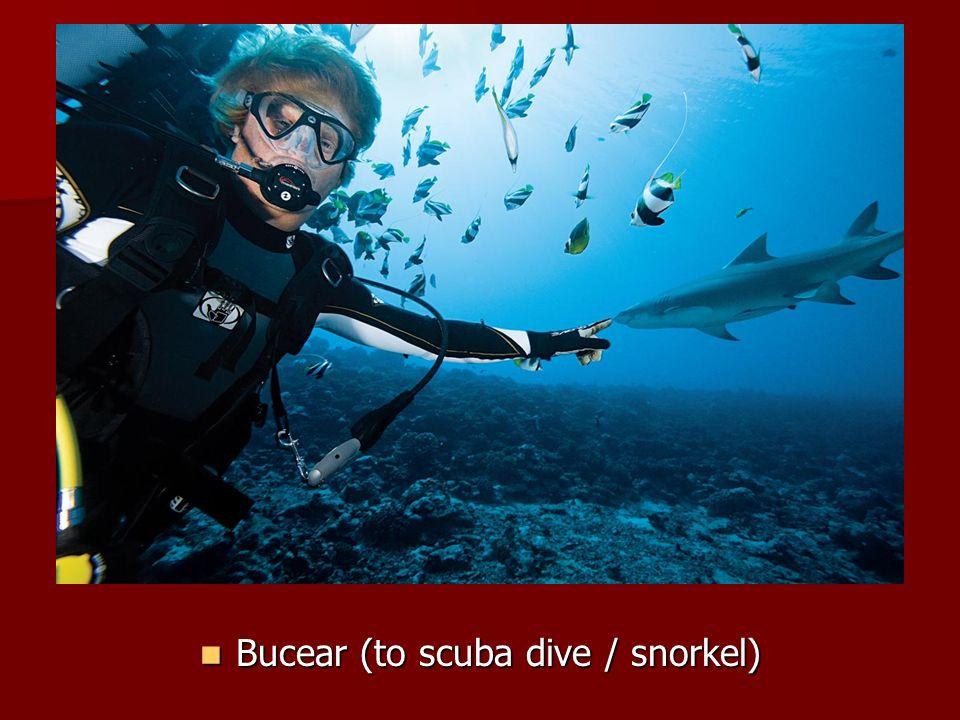 Bucear (to scuba dive / snorkel) Bucear (to scuba dive / snorkel)
