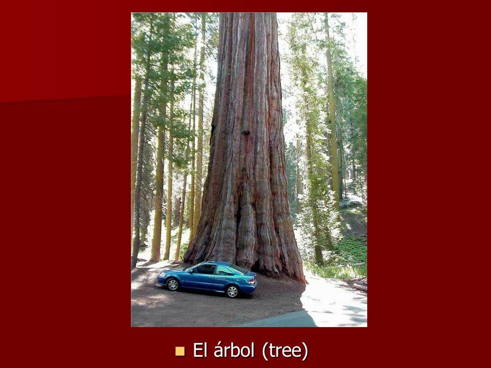 El árbol (tree) El árbol (tree)