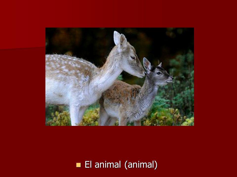 El animal (animal) El animal (animal)