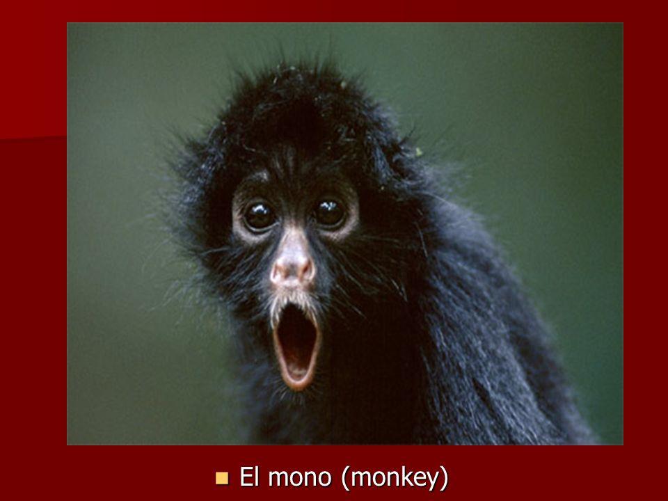 El mono (monkey) El mono (monkey)