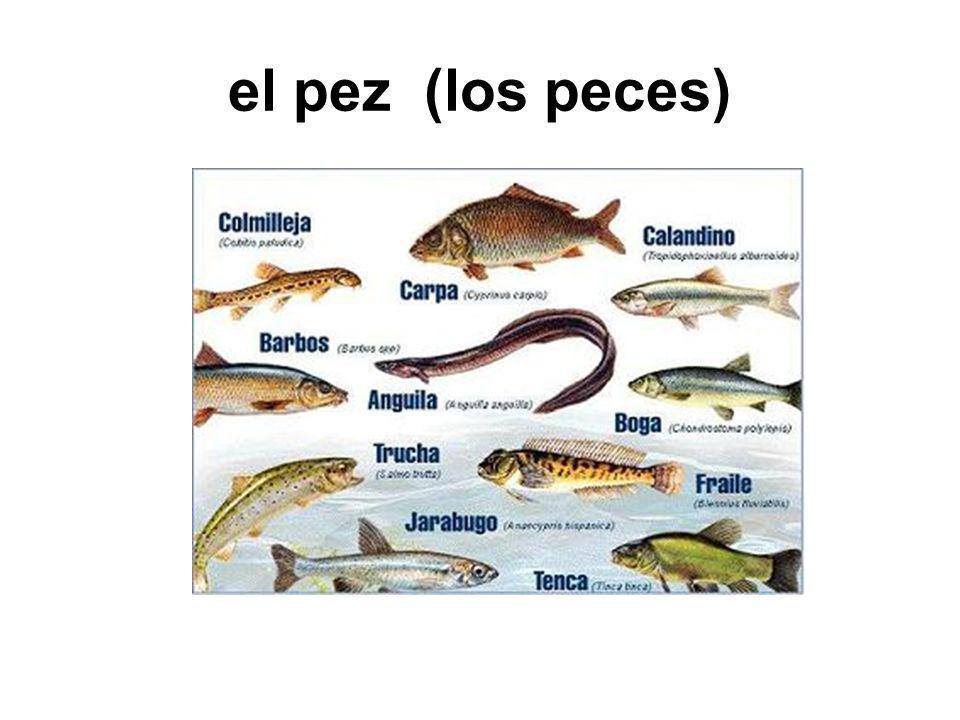 el pez (los peces)