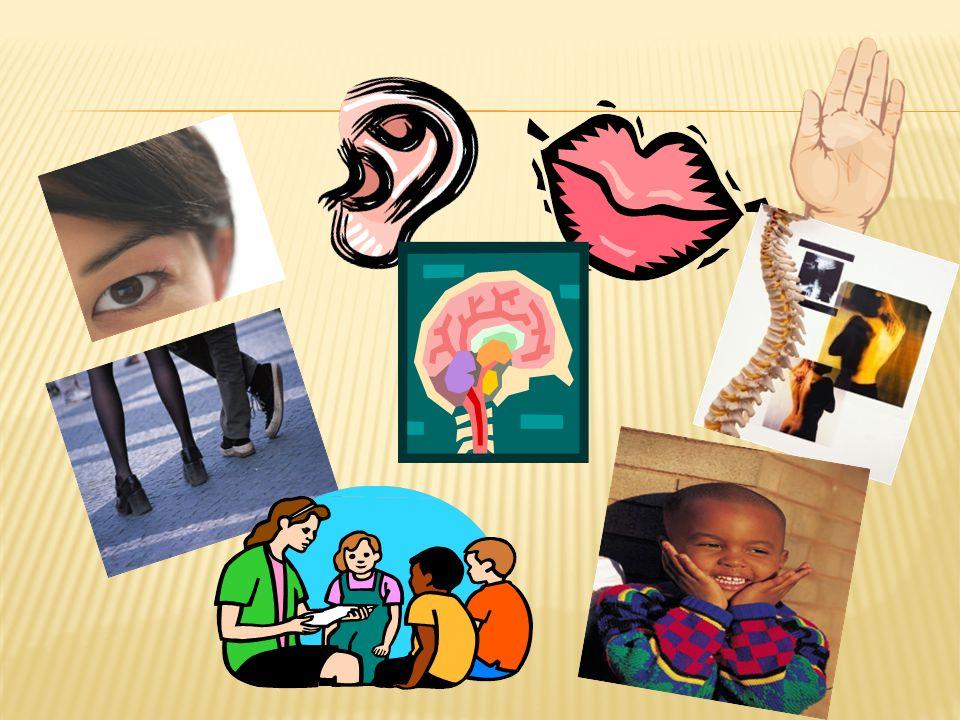 La tutoría del alumnado con nee será ejercida en las aulas específicas por el profesorado especializado…..