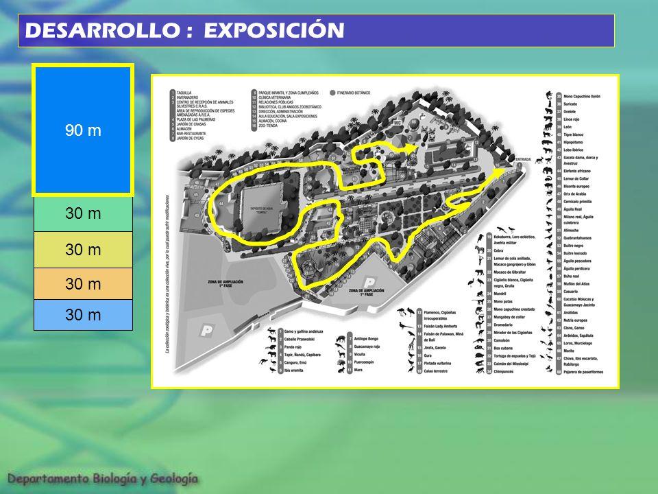 30 m 90 m 30 m DESARROLLO : EXPOSICIÓN