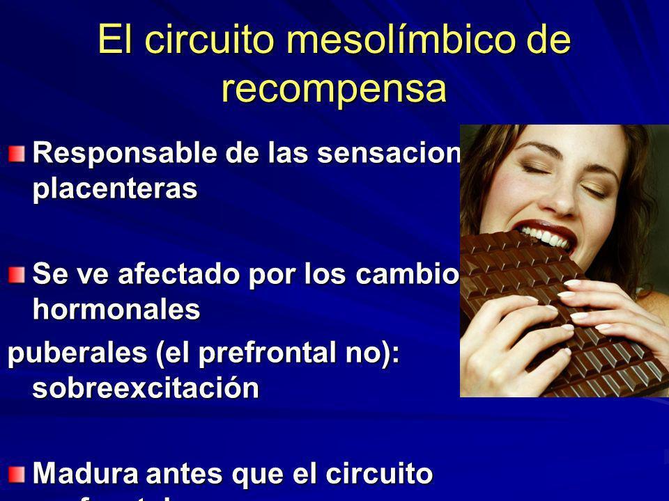 El circuito mesolímbico de recompensa Responsable de las sensaciones placenteras Se ve afectado por los cambios hormonales puberales (el prefrontal no