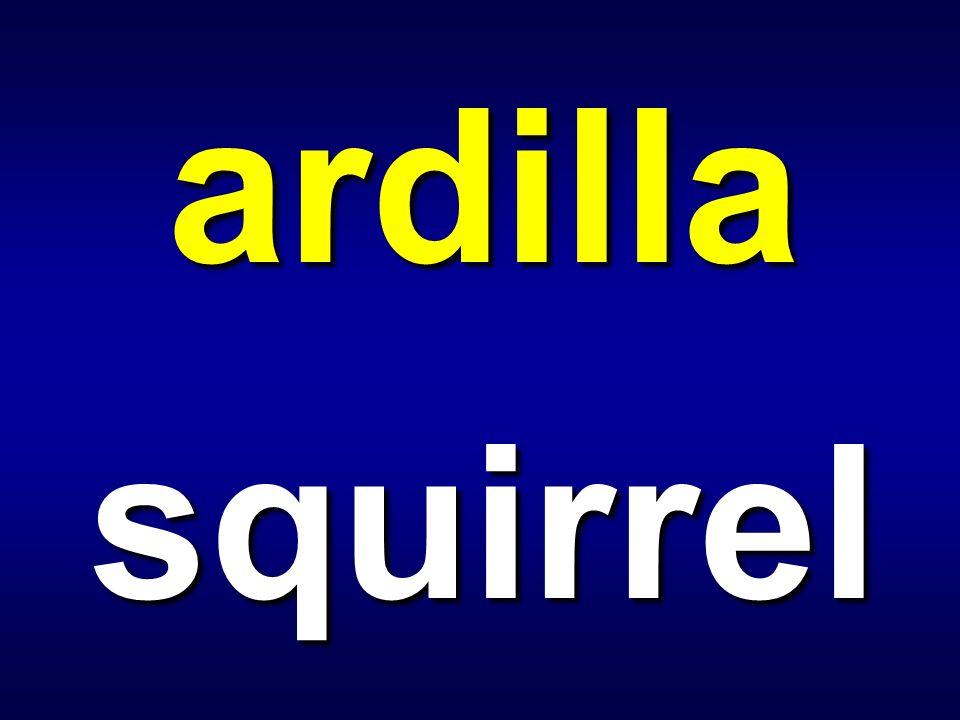 ardilla squirrel