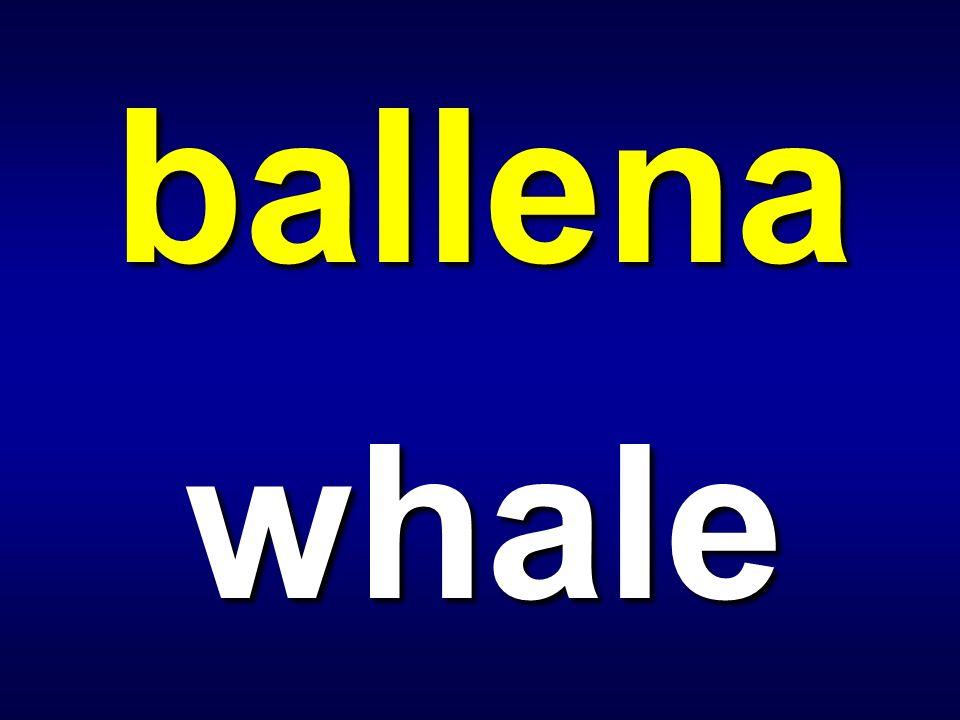 ballena whale