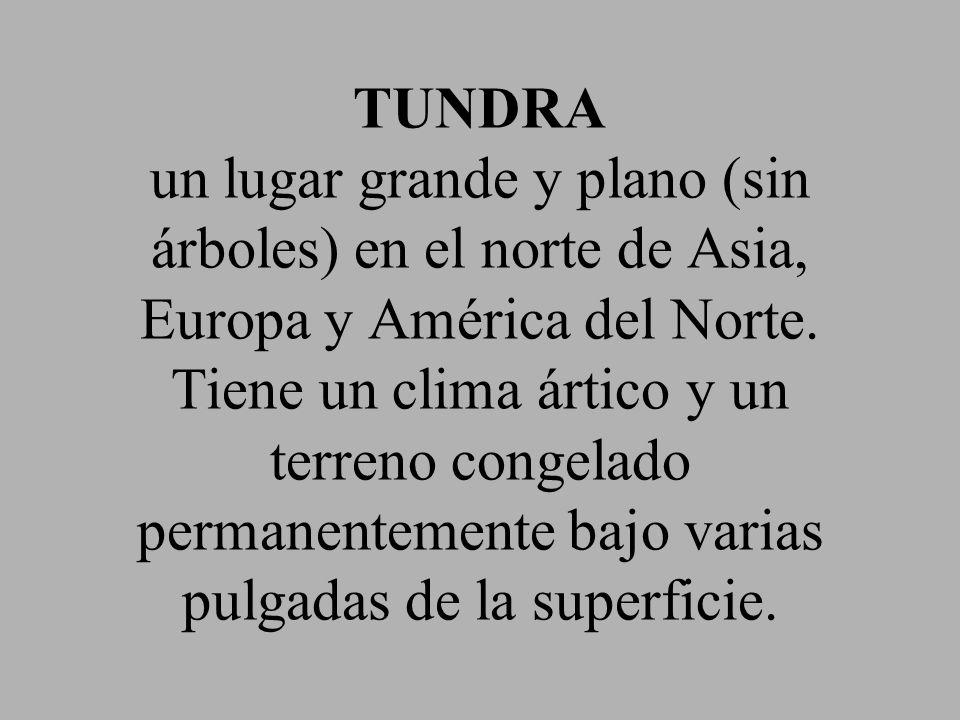 TUNDRA un lugar grande y plano (sin árboles) en el norte de Asia, Europa y América del Norte. Tiene un clima ártico y un terreno congelado permanentem