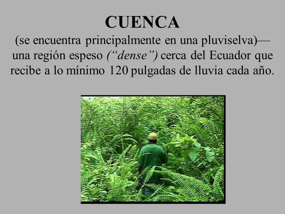CUENCA (se encuentra principalmente en una pluviselva) una región espeso (dense) cerca del Ecuador que recibe a lo mínimo 120 pulgadas de lluvia cada
