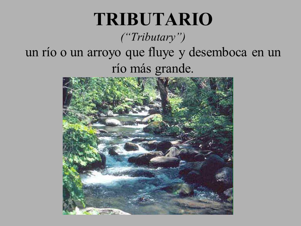 TRIBUTARIO (Tributary) un río o un arroyo que fluye y desemboca en un río más grande.