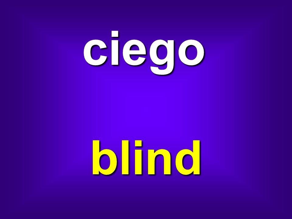 ciego blind