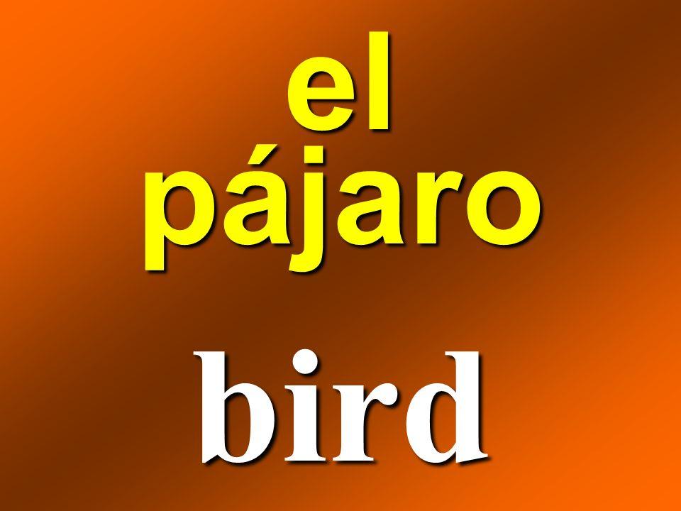 el pájaro bird