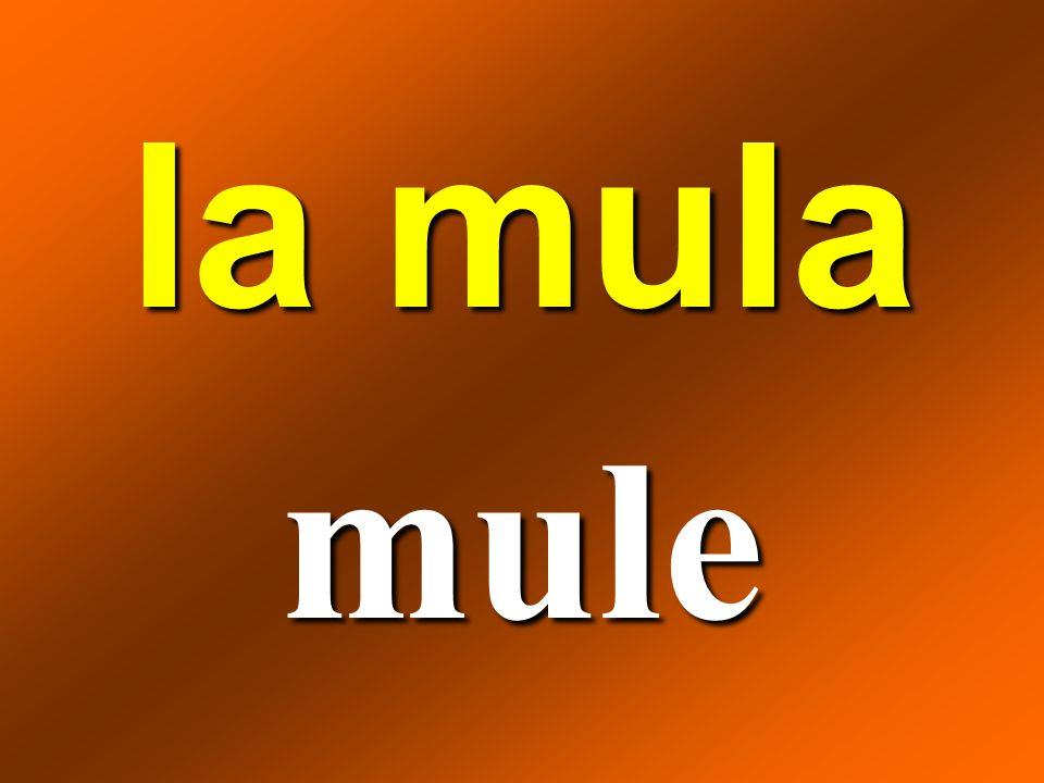 la mula mule