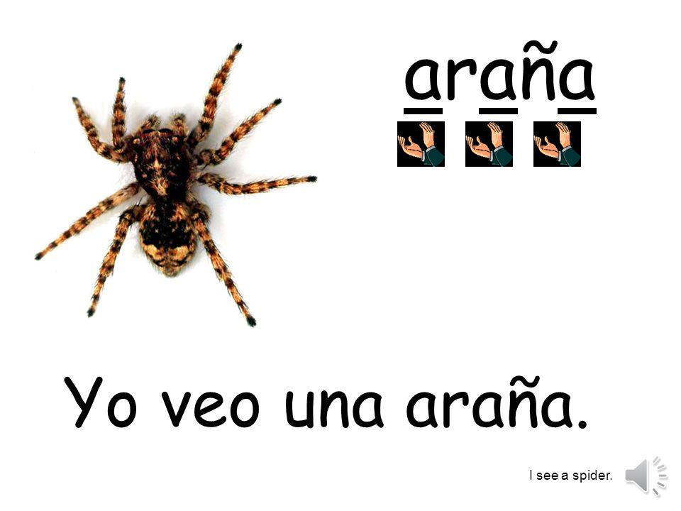 arañaaraña Yo veo una araña. I see a spider.