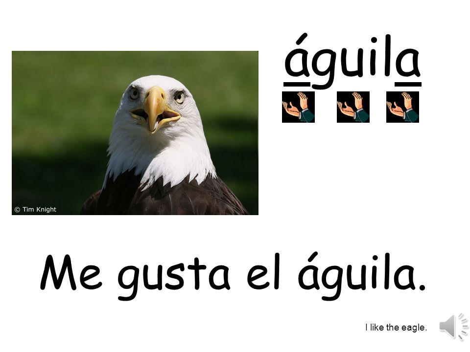 águila Me gusta el águila. I like the eagle.