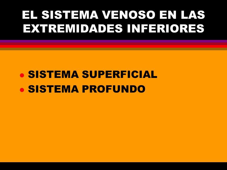 EL SISTEMA VENOSO EN LAS EXTREMIDADES INFERIORES l SISTEMA SUPERFICIAL l SISTEMA PROFUNDO
