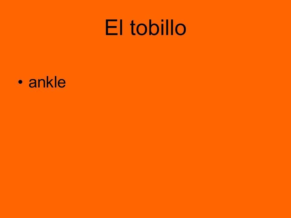 El tobillo ankle