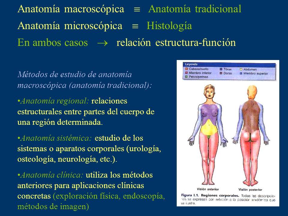 Anatomía macroscópica Anatomía tradicional Anatomía microscópica Histología En ambos casos relación estructura-función Métodos de estudio de anatomía