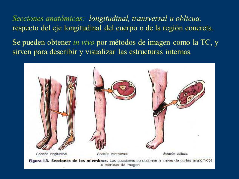 Secciones anatómicas: longitudinal, transversal u oblicua, respecto del eje longitudinal del cuerpo o de la región concreta. Se pueden obtener in vivo