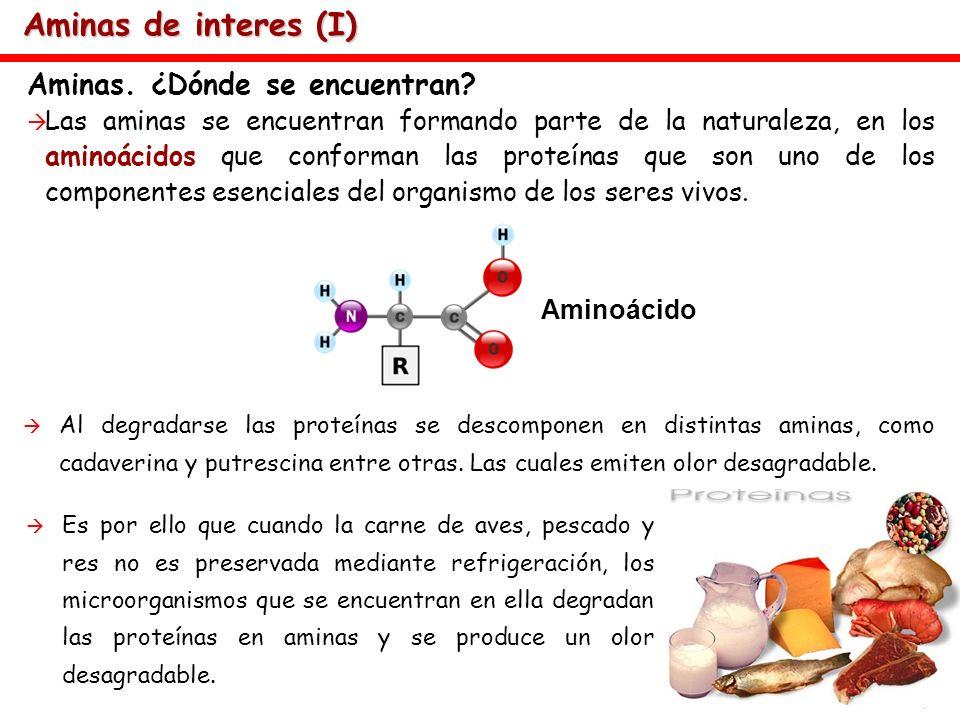 Aminas de interes (I) Aminas. ¿Dónde se encuentran? Las aminas se encuentran formando parte de la naturaleza, en los aminoácidos que conforman las pro