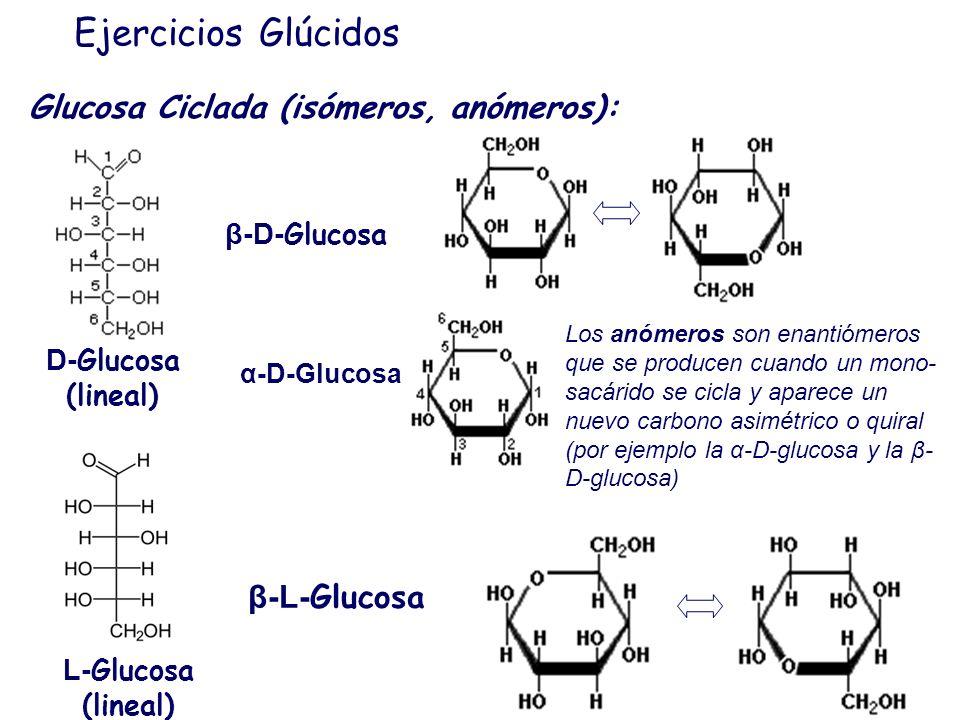 Ejercicios Glúcidos Isomeros: Los diastómeros son estereoisómeros que no son imágenes especulares pero tampoco se pueden superponer. Por ejemplo todos