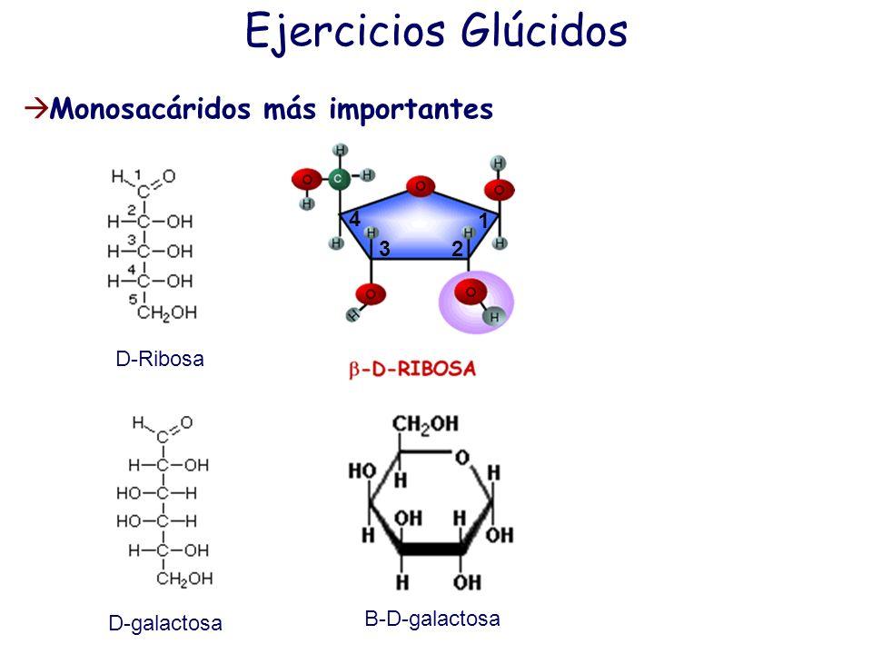 Monosacáridos más importantes Ejercicios Glúcidos