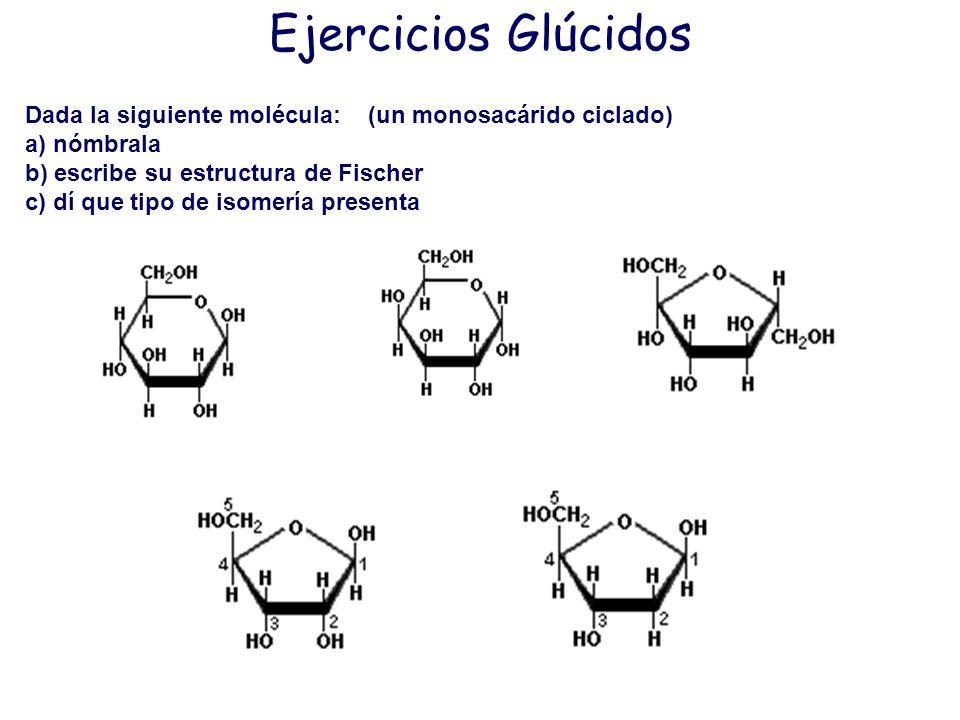 Ejercicios Glúcidos Maltosa (almidón) Celobiosa (celulosa) Lactosa Sacárosa Dado el siguiente disacárido, indica: a) su nombre b) el nombre de los mon