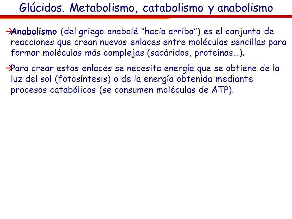 Glúcidos. Metabolismo, catabolismo y anabolismo El metabolismo celular es el conjunto de todas las reacciones químicas que mantienen la vida de la cél