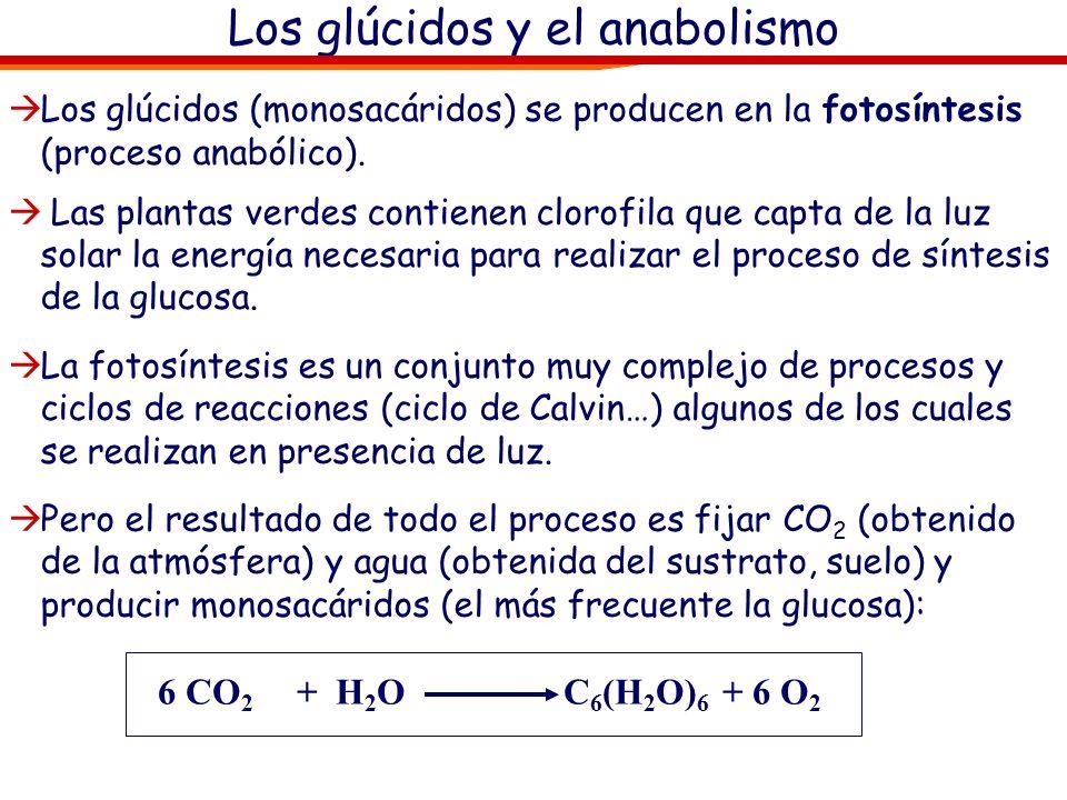 Glúcidos. Metabolismo, catabolismo y anabolismo Anabolismo (del griego anabolé hacia arriba) es el conjunto de reacciones que crean nuevos enlaces ent