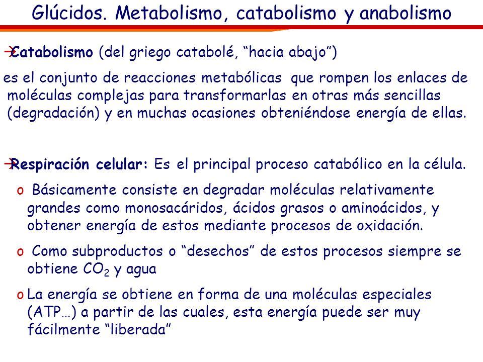 Anabolismo, fotosíntesis Sólo la idea (no hay que sabérselo) Sólo la idea (no hay que sabérselo)